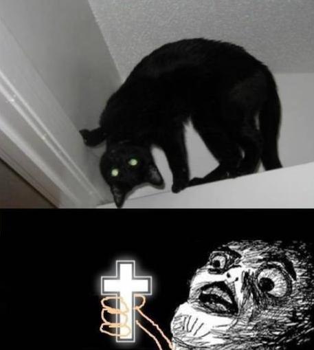 cat watch wallpaper